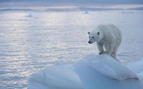 climatechangebear
