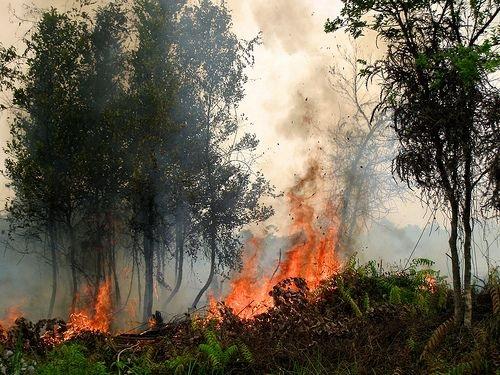 haze-fire-cifor