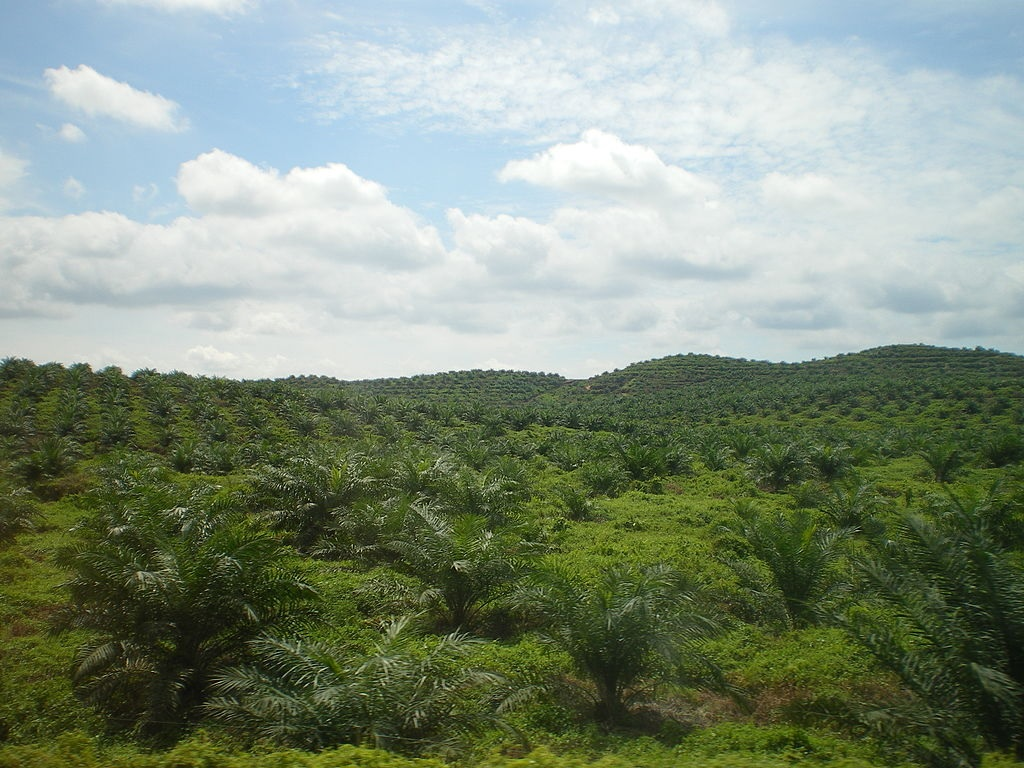palm-oil-msia