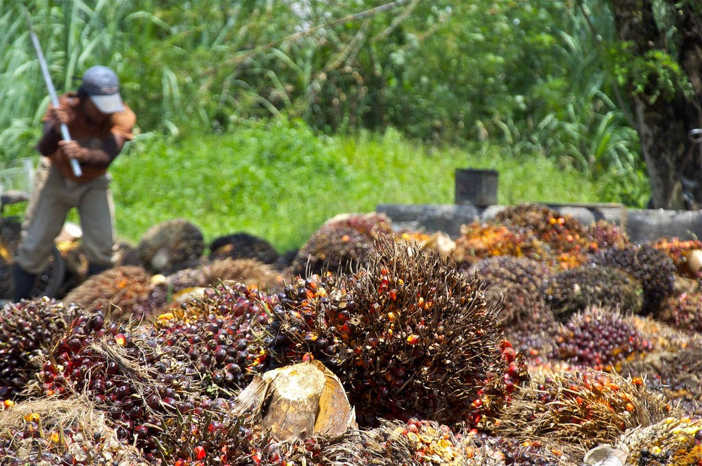 20171003_palmoil_news_featured