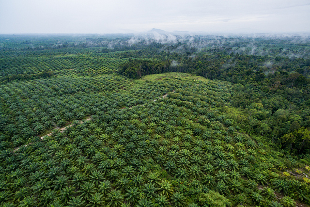"Photo credit: ""Aerial view of oil palm plantation"" by Nanang Sujana/CIFOR"