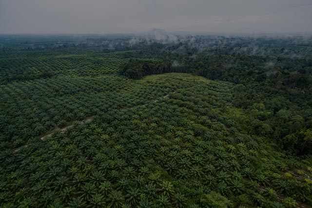 Aerial-view-of-oil-palm-plantation_banner