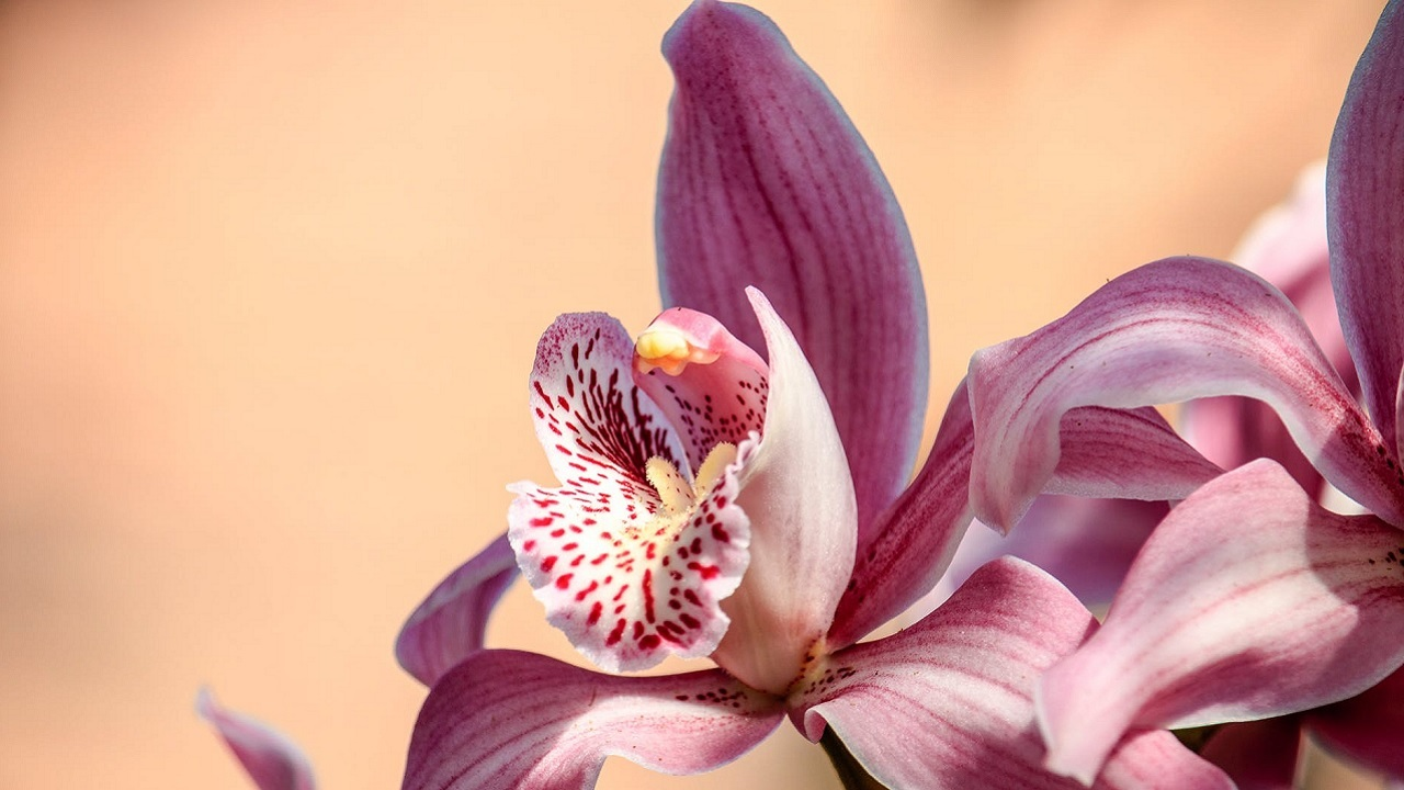 orchid-diplomacy-trump-kim