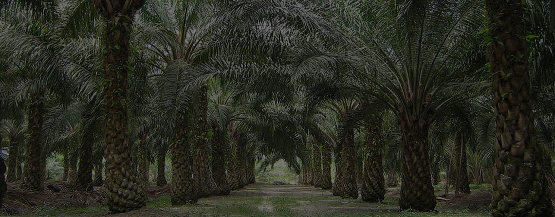 oilpalm-malaysia-169-banner