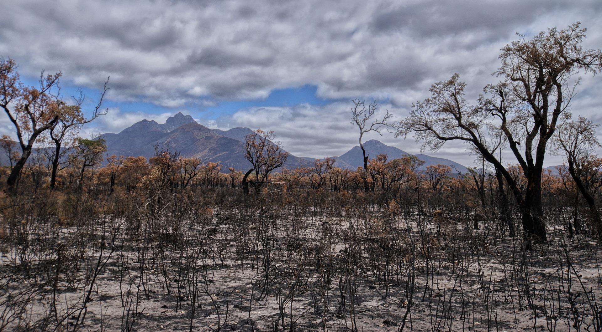 bushfire-4772185_1920