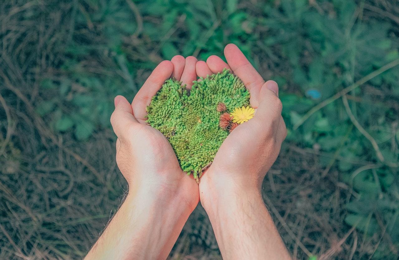 sustainability-esg-trees-green-pexels-min-an-1230157